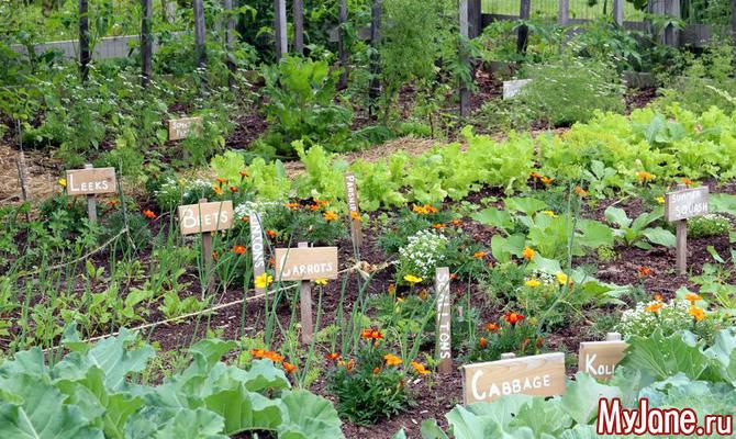 Планировка огорода – для чего она нужна