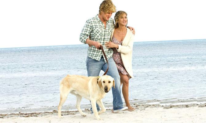 Лучшие фильмы про псов к международному Дню собак