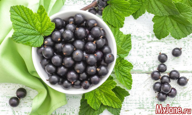 Чёрная смородина - ягода здоровья