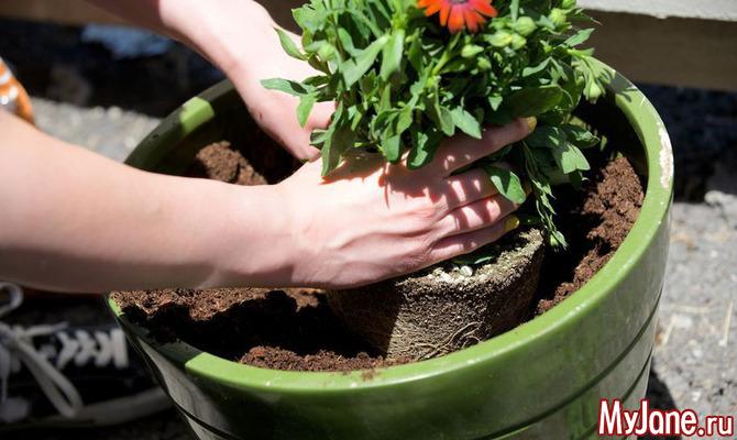 Пересаживаем комнатные растения. Что надо знать