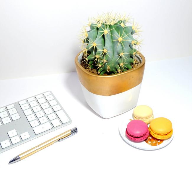 Полезное комнатное растение кактус thumbnail