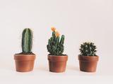 Все виды кактусов с фото и названием