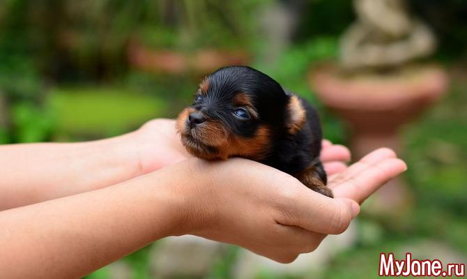 Уход за щенками и собакой после родов