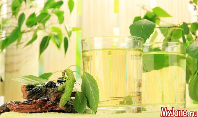 Дары березы: полезный сок