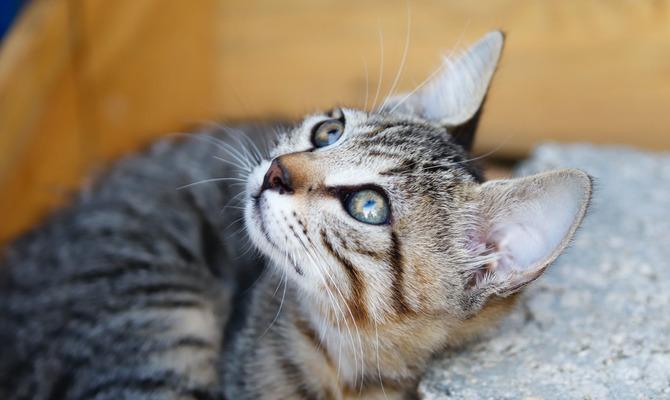 Магия кошки. Серый, рыжий питомец