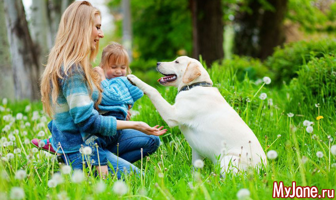 Самые распространенные мифы о собаках