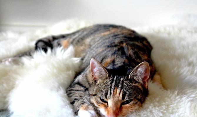 Безопасна ли валерьянка для кота?