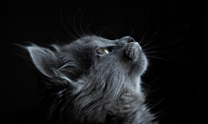 Как пережить смерть домашнего животного, если вместе с ним ты хоронишь часть своей души: 10 советов для вашей психики