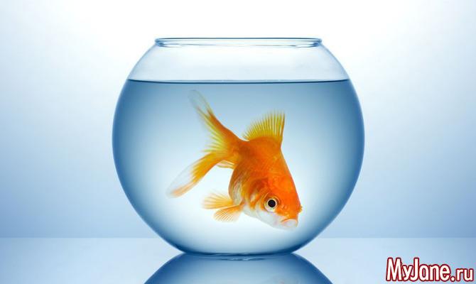 Аквариумные рыбки: с чего начать