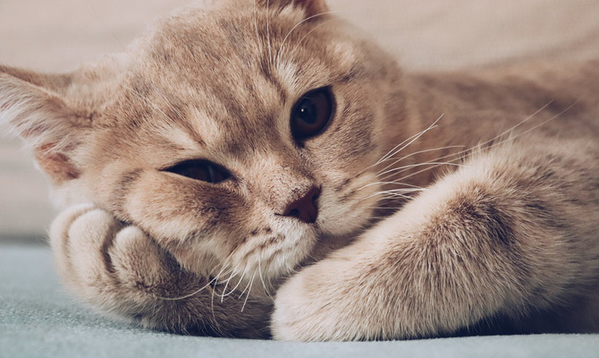 Бытовые опасности, от которых надо беречь домашних кошек