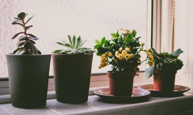 5 комнатных растений, которые привлекут любовь, счастье и процветание в каждый дом
