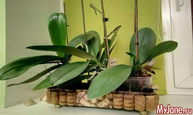 Декор горшка для орхидей