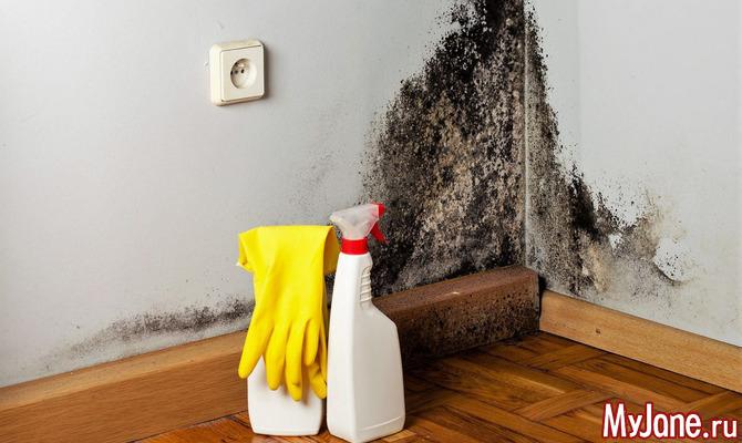 Как и чем обработать стены в квартире от грибка или плесени?