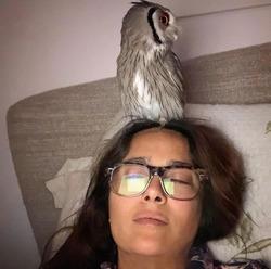 Сальма Хайек частенько медитирует с настоящей совой на голове