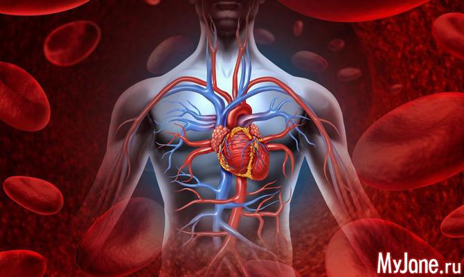 Кровеносные сосуды - дорога жизни