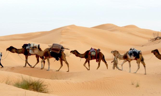 24 сентября — Международный день караванщика